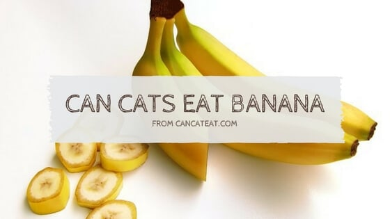 11 Facts About Can Cats Eat Bananas Everyone Should Know