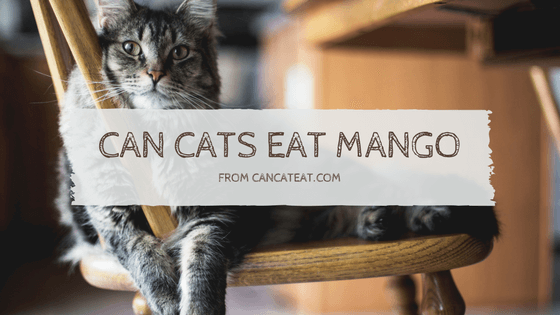 14 Benefits Of Can Cats Eat Mango | Everyone Should Know