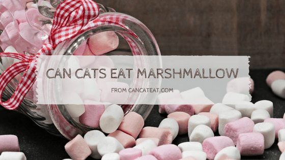 8 Facts On Can Cats Eat Marshmallows Everyone Should Know