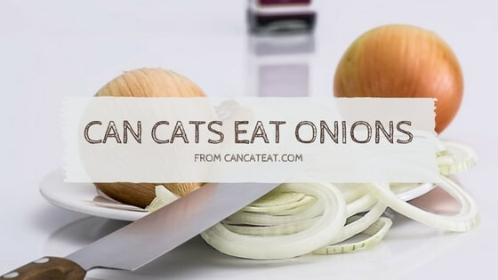 14 Facts About Can Cats Eat Onions That'll Make Your Cat's Health Better