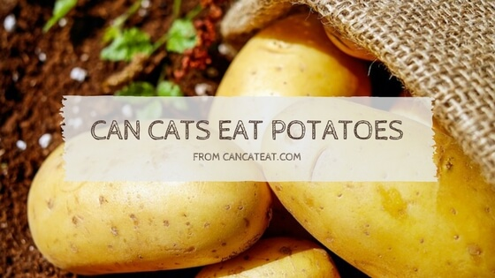 9 Benefit of Can Cats Eat Potatoes | What About French Fries And Mashed Potatoes