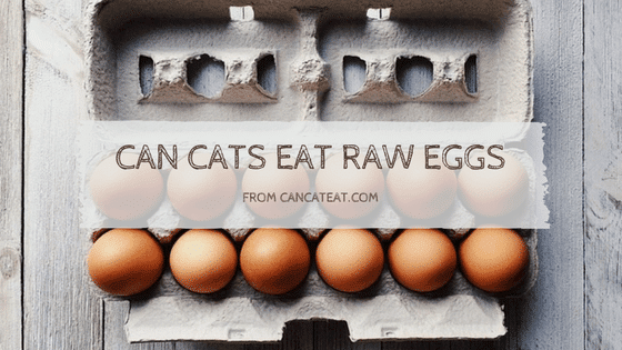 11 Benefit Of Cats Eat Raw Egg | You Should Not Miss