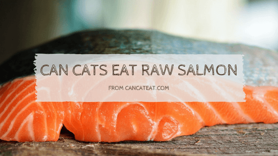 10 Things Everyone Should Know About Can Cats Eat Raw Salmon