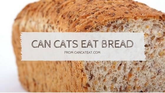 7 Unexpected Fact About Can Cats Eat Bread | You Should Not Miss