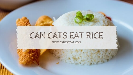 10 Facts About Can Cats Eat Rice  Everyone Thinks are True