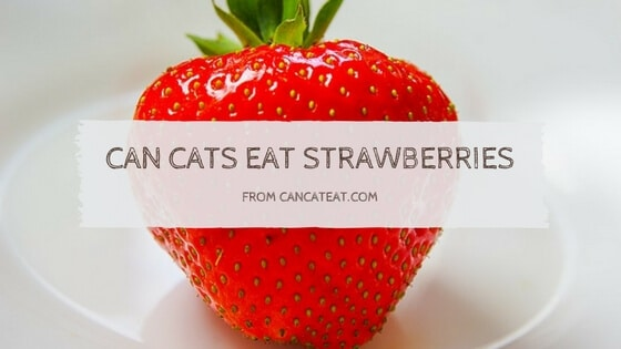 16 Freaky Reasons Can Cats Eat Strawberries Could Benefit Your Cat