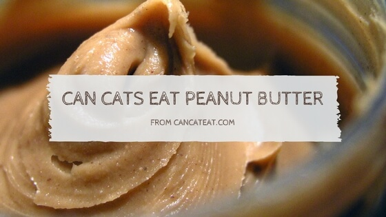 8 Facts About Can Cats Eat Peanut Butter | Cat Parents Should Not Miss it