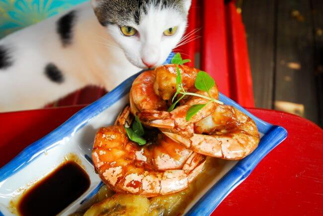 can cats eat shrimp cocktail