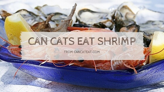 9 Things You Should Know About Can Cats Eat Shrimp