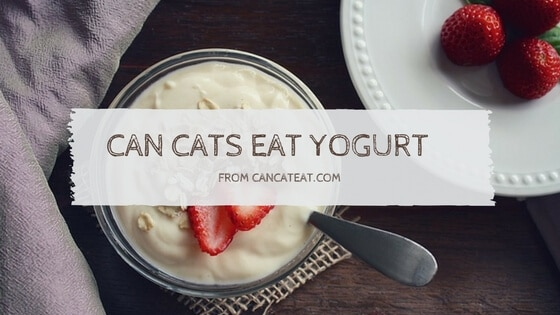 15 Beneficial Things About  Can Cats Eat Yogurt | You Should Not Miss it