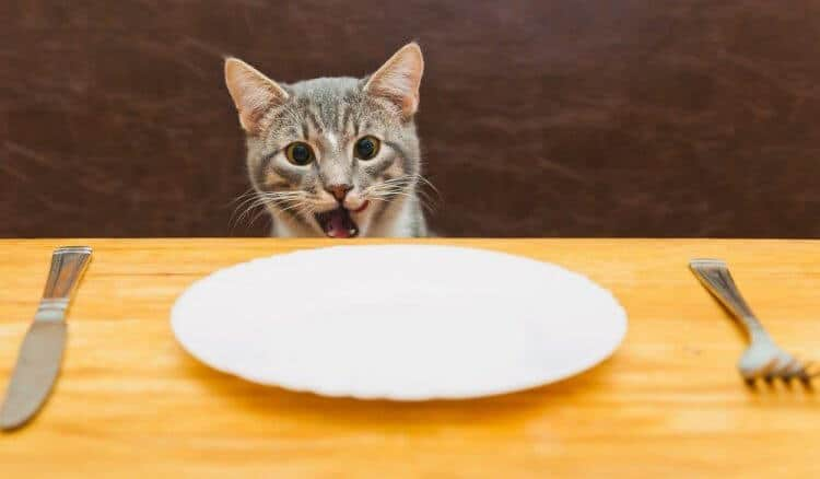 can kittens eat mango