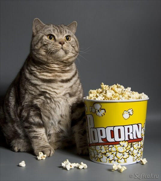cat ate popcorn kernels