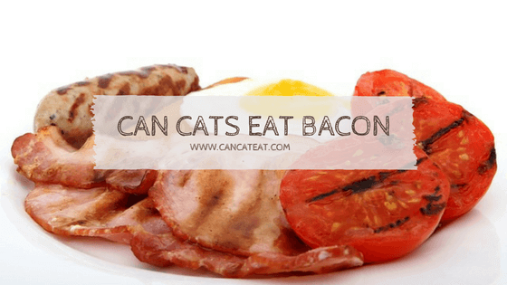 13 Facts About Can Cats Eat Bacon | What About Sausage And Ham
