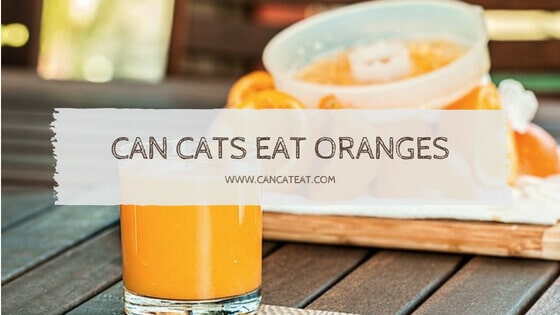 9 Things About Can Cats Eat Oranges, Lemons | What Other Fruits Are Toxic To Cats
