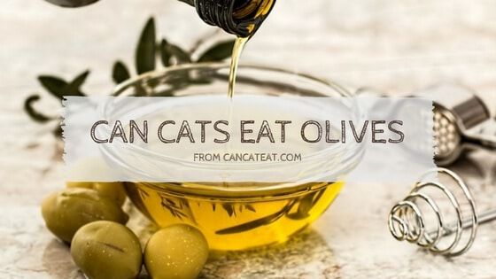 14 Reasons  You Should be  Talking About  Can Cats Eat Olives