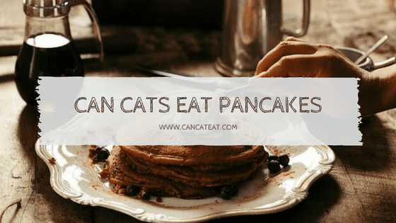 4 Exciting Facts About Can Cats Eat Pancakes | Should You Give Your Cat