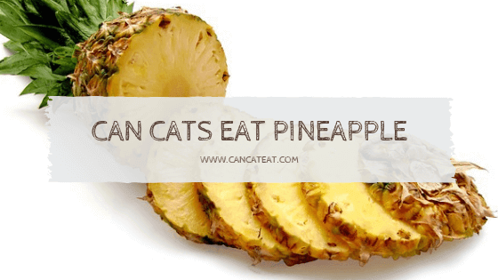 11 Things You Should Know About Can Cats Eat Pineapple