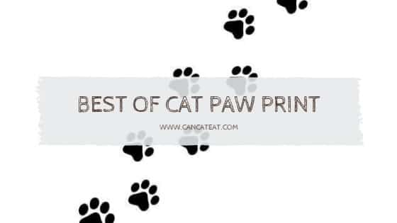 8 Best Cat Paw Print You Should Get Today