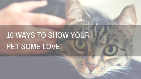 10 Ways To Show Your Pet Some Love