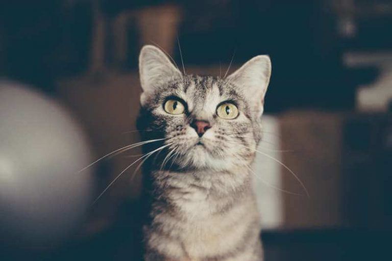 Royal Canin Wet Cat Food Review In 2019