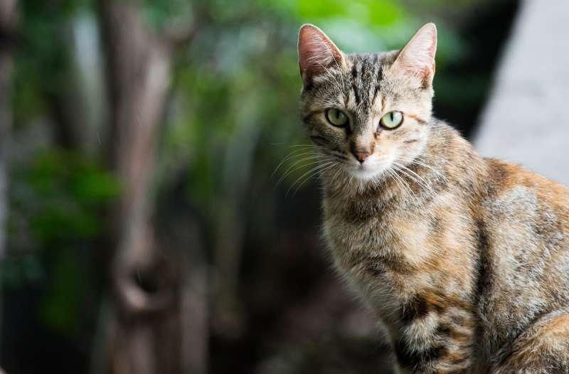 The 8 Best High Protein Cat Food In 2019
