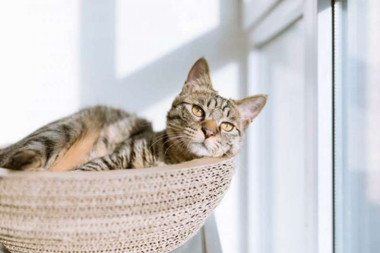 Best Cat Food For Urinary Health In 2019 [Effective Way Discussed]