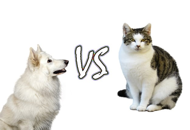 Which is better to have as a pet a cat or a dog?