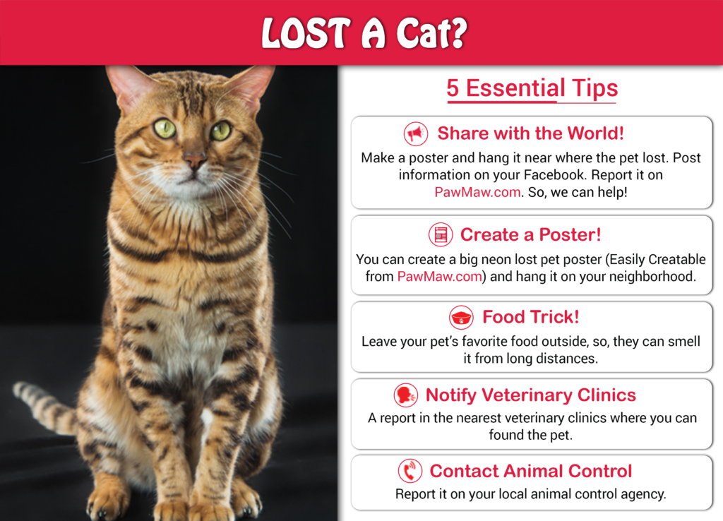How to Find A Missing Cat