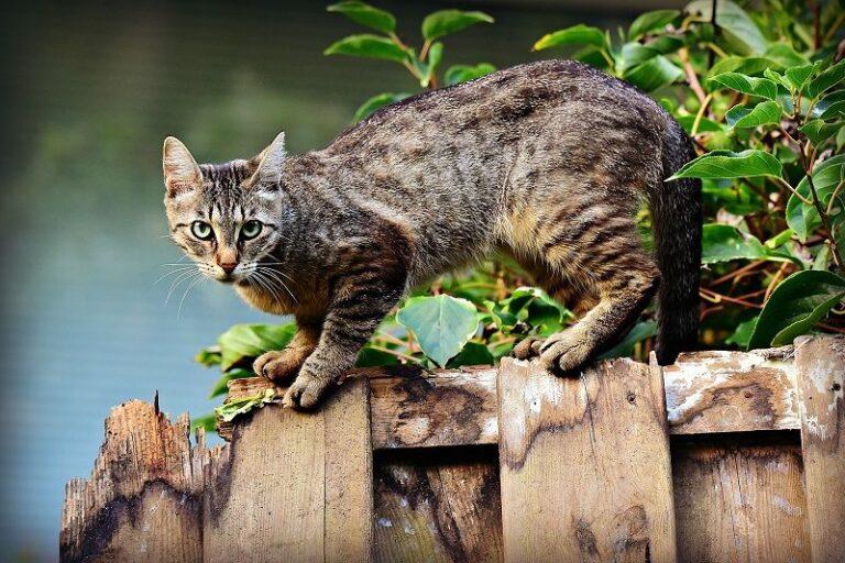 Honest Orijen Cat Food Review in 2020