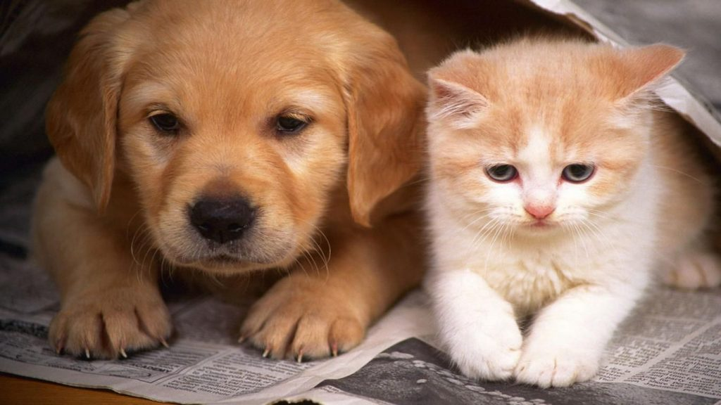 Can Small Cats And Dogs Coexist?