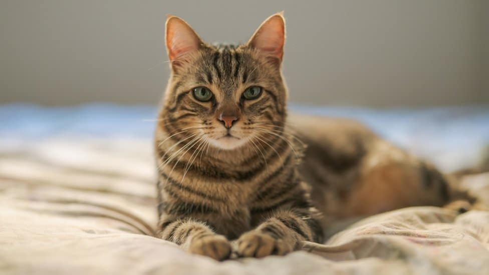 How Using Cat Wipes Can Benefit Your Pet?