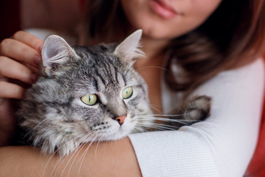 Why Are Cats More Popular as Pets?